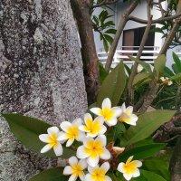 Цветы на камне :: Дмитрий Максимовский