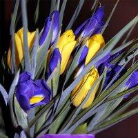 С прошедшим 8 Марта, милые, нежные, обоятельные, привлекательные, и самые, самые ... :: Лариса Корженевская