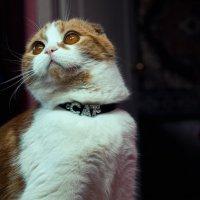 Мой кот :: Ustas FritZZZ