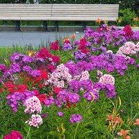городские цветы-разноцветные флоксы :: Олег Лукьянов