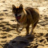Бегущая по песку :: Karolina