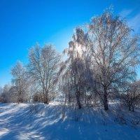 Солнце сквозь ветви :: Анатолий Иргл