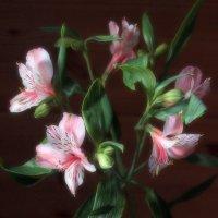 Дарите женщинам цветы! :: veilins veilins