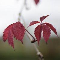 Осень :: Александр Сидоров