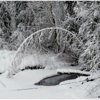 Зимой на речке :: Светлана Петошина