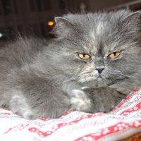 Моя подружка Китти всегда рядом...) :: Galina Dzubina