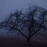 fog :: Влад