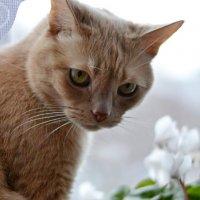 Март на окошке. :: Елена Третьякова