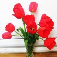Тюльпаны :: татьяна