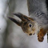 ого! орешков принесли!!!! :: Ксения просто Ксения
