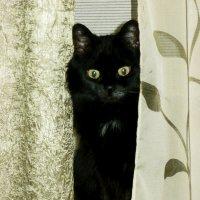 Я Киса! А меня кто-нибудь поздравит с кошачьим Мартом? :: Надежда