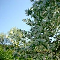 Настроение весны :: Стас Борискин