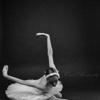 Классика. Лебедь. Черно-белое фото :: Olesya