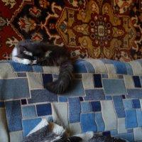 Спящие кошки :: Николай Холопов