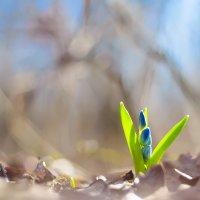 весна :: Виталий Шарипов