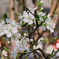 Цветут деревья :: Валерий Дворников