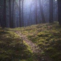 Весна пришла :: Виталий Латышонок
