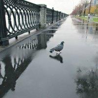 Осенний дождливый день.. :: Galina ✋ ✋✋