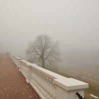Золотом в тумане... :: tipchik
