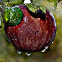 Осенний дождь :: Клара