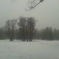 Мокрый снег :: Сапсан