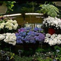 в цветочном магазине :: Александр Корчемный