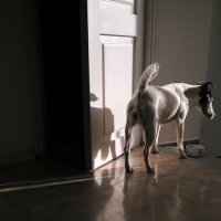 Собака Соня :: Tanja Gerster