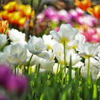 Аромат весны :: Ксения Базарова