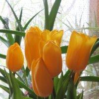 Тюльпаны :: Дмитрий Никитин