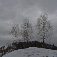 Три дерева :: Людмила Якимова