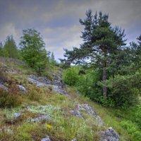 Склон карельской скалы :: Константин