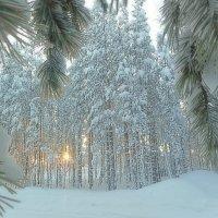 Морозный денек... :: Galina ✋ ✋✋