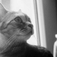кошка :: Dmitriy Predybailo