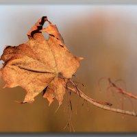 Одинокий листок. :: Paparazzi