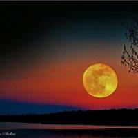 Вот такая луна :: °•●Елена●•° Аникина♀