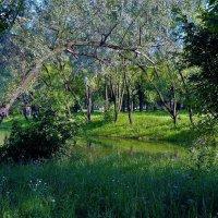 В глубине зелёного парка... :: Sergey Gordoff