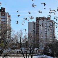 Голуби в полете. :: Ираида Мишурко