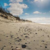 Пустынный пляж :: Владимир Самсонов