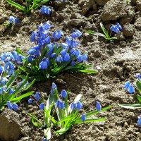 Рисовала весна на полянке :: Татьяна Смоляниченко