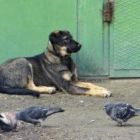 Мирное соседство :: Татьяна Смоляниченко