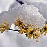 весна... :: юрий иванов