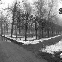 Там..,за туманами.. :: tipchik