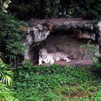 Белый кот :: Владимир Куликов