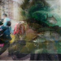 Крупная рыба. :: Ирина Зайцева