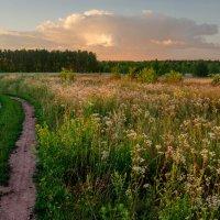 Вечерние полевые тропы :: Александр Березуцкий (nevant60)