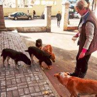 Кормление уличных собак :: Vladimir Semenchukov