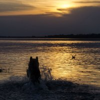 Купание закатного пса :: Татьяна Степанова