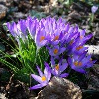 Весенний  букетик для Вас! :: Galina Dzubina