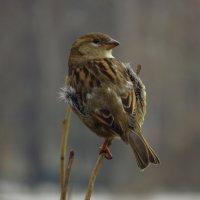 Взгляните на птиц небесных: они ни сеют, ни жнут ... :: Андрей Лукьянов