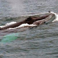 дыхание кита :: vg154